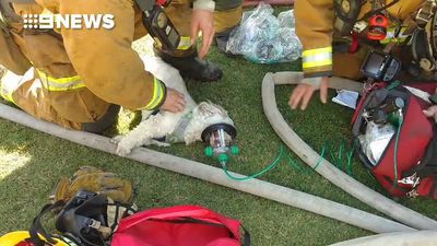 Firefighters revive dog pulled from burning building