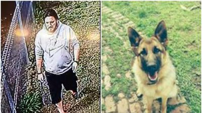 CCTV captures alleged thief stealing beloved dog from backyard