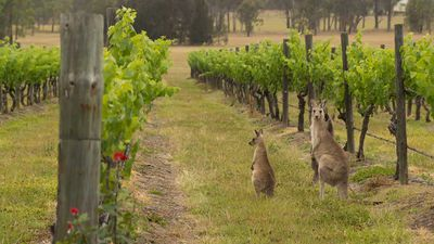 Make the most of a weekend with kids in the NSW Hunter Valley