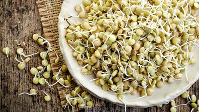 Health trend spotlight: Are sprouted grains healthier than regular grains?