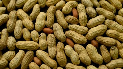 Aussie researchers make major breakthrough for peanut allergy
