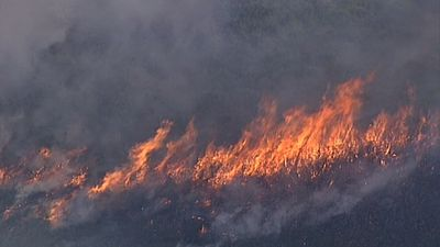 Fears for bushfire season after grass blaze in Sydney