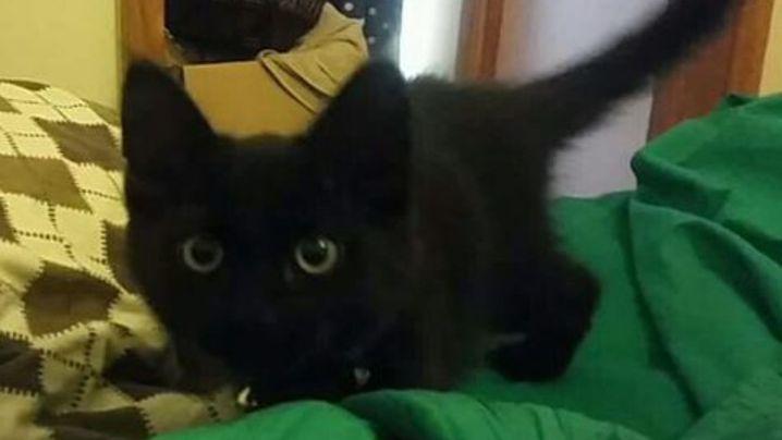 Sooty, a three-legged kitten, was found viciously killed last week. (Facebook)