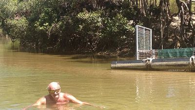 Loose unit grandad swims in croc infested water to impress the grandkids