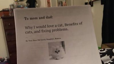 11-year-old writes six-page essay to convince parents she needs a cat