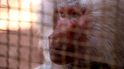 Syrian zoo's last surviving animal traumatised by conflict