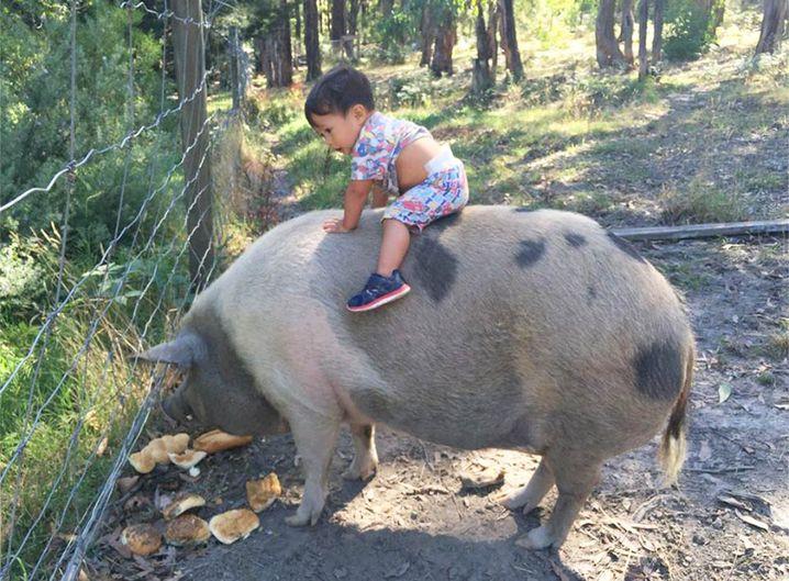 Miniature pig Fran and one-year-old Walter. (Ryan Kenyon)