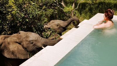 The ultimate luxe wildlife retreats for animal lovers