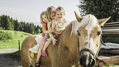 Brisbane open house offering free pony rides