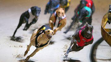 Greyhounds racing. (AAP)