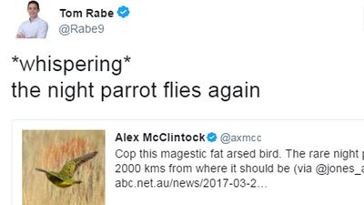 The night parrot has been spotted in WA and Twitter is being weird about it