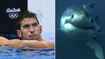 Can Michael Phelps out-swim a great white shark?