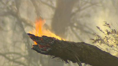 Total fire ban declared in NSW's far west