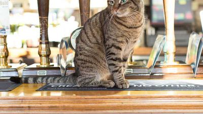 Photographers capture the adorable cats that live in London's pubs