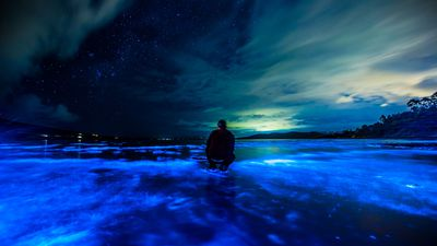 Tasmania's Lauderdale Beach glows blue in rare natural phenomenon