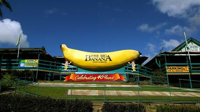 Beyond the Big Banana: Coffs Harbour's stunning scenic walk is a must visit