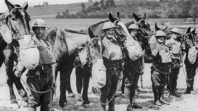 Horses fitted with gas masks in WWI