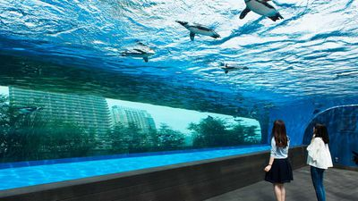 The Tokyo aquarium where the penguins fly above the city