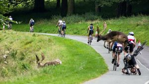 Triathlete bucked out of contention by deer