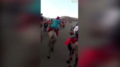 Tourists captures camel traffic jam in the Gobi Desert