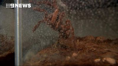 Evicted tenant leaves more than 70 tarantulas and scorpions in unit