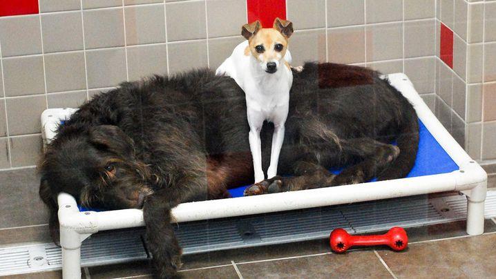 "Odd couple ""CC"" and ""Chewbacca"". (Facebook/Animal Rescue League of Iowa)"