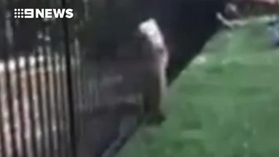 Oh, bother: Tiny bear cub gets into a sticky situation