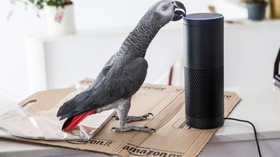 Parrot goes online shopping and orders surprise gift for owner