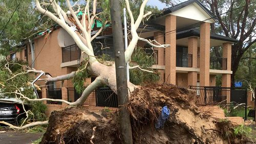 Trees have been downed across Sydney in heavy winds. (9NEWS)