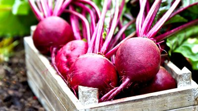 Beetroot: This disgusting superfood could protect against Alzheimer's