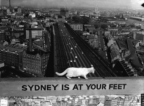 One of the pylon cats tiptoeing across a barrier nearly 100 metres above the ground.