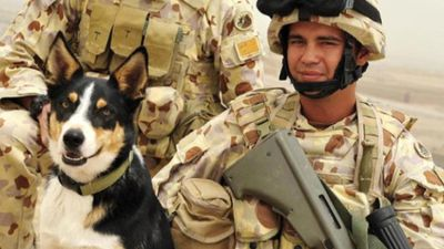<p>Sapper Darren Smith and dog Herbie  died in an explosion caused by an improvised explosive device (IED) in Afghanistan in June 2010.</p> <p><br> </p>