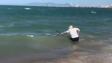 Man beats sea snake to death with walking stick