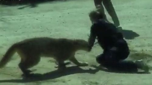 A deputy tries to fight off the mountain lion with his bare hands.