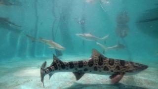 Tracy Morgan's Giant Shark Tank Revealed!