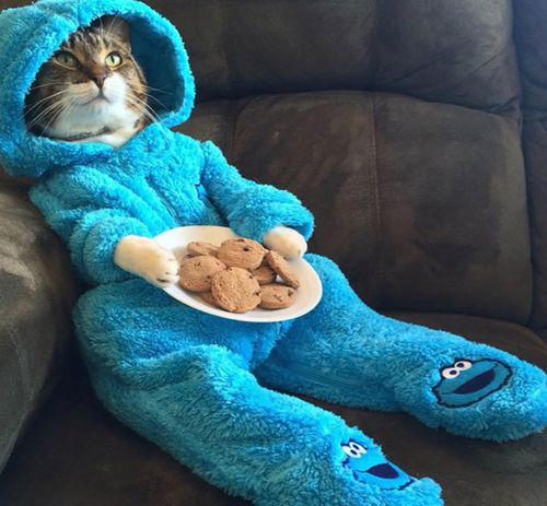 US embassy in Canberra sorry for cat pyjama email