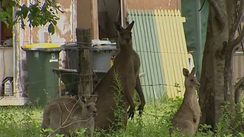 She said her dog started chasing the kangaroo, so she tried to intervene and was attacked.