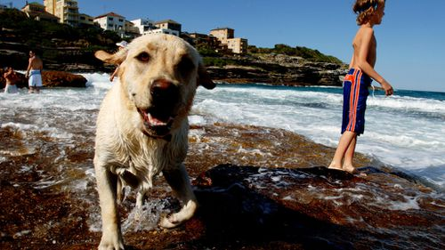 Pet heatwave warning issued after dog died while tied to clothesline