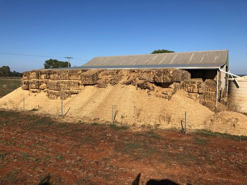 Mice have destroyed these hay bales in central west NSW. mouse plague