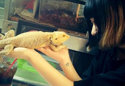 Reptile cafes