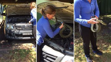 Patrolman checking flat battery finds huge python