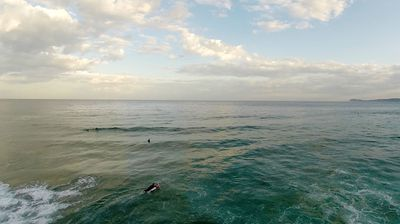 Surfers and paddleboarders enjoy the beach, oblivious to the giant predator lurking close by.