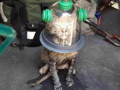 Cat survives house fire after firefighters pull out oxygen mask designed for pets