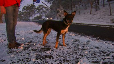 The ACT State Emergency Service responded to more than 160 calls for help yesterday. (9NEWS)