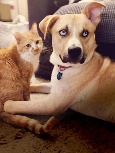 A ginger cat and Siberian husky sitting next to each other in a living room.