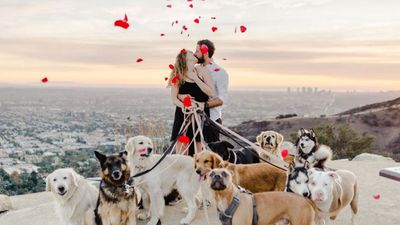 A capella Disney songs, 16 dogs and a sunset involved in this proposal