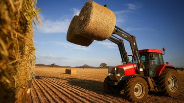 Australian hay farmers are waiting to find out if their export permits to China will be renewed.