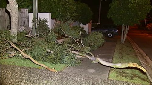 Trees and branches were brought down by the storm. (9NEWS)