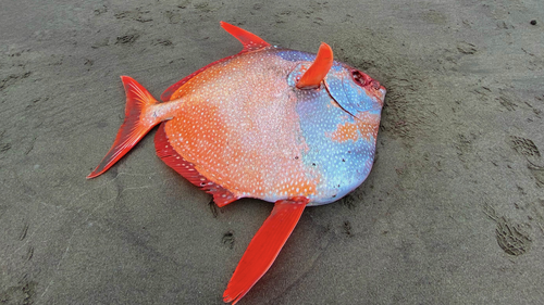 The fish weighed a whopping 45 kilograms.
