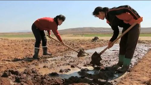 North Korean farmers using hand tools.